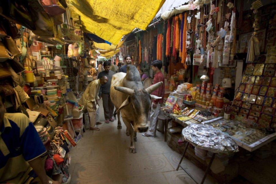 政府把手伸進廚房,印度推全國性「禁牛令」