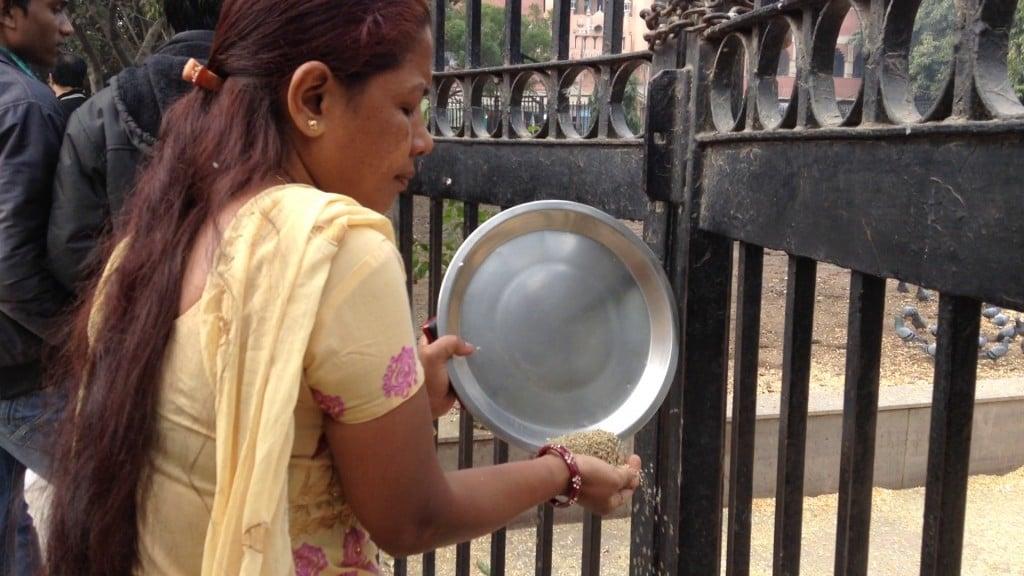 把頂樓還給猴子,把地板歸老鼠,我喜歡印度人對待動物的可愛之處