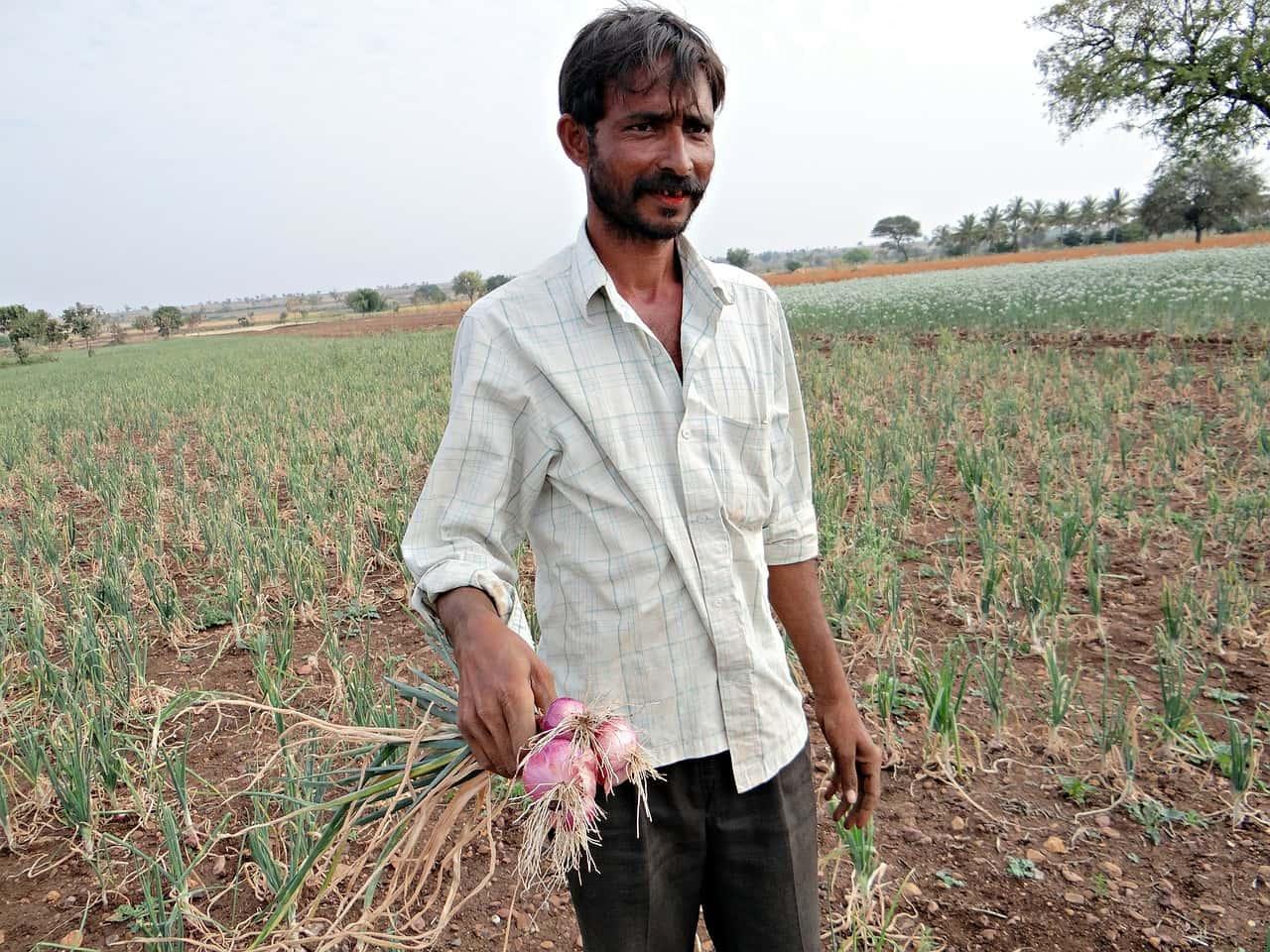 在印度,被稱作「窮人蔬菜」的洋蔥重要到可以左右政治!