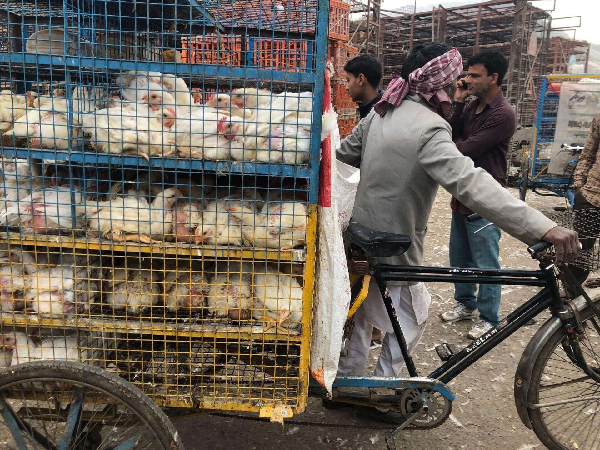 駐印度記者的封城日記:窺見新型冠狀病毒的防疫挑戰