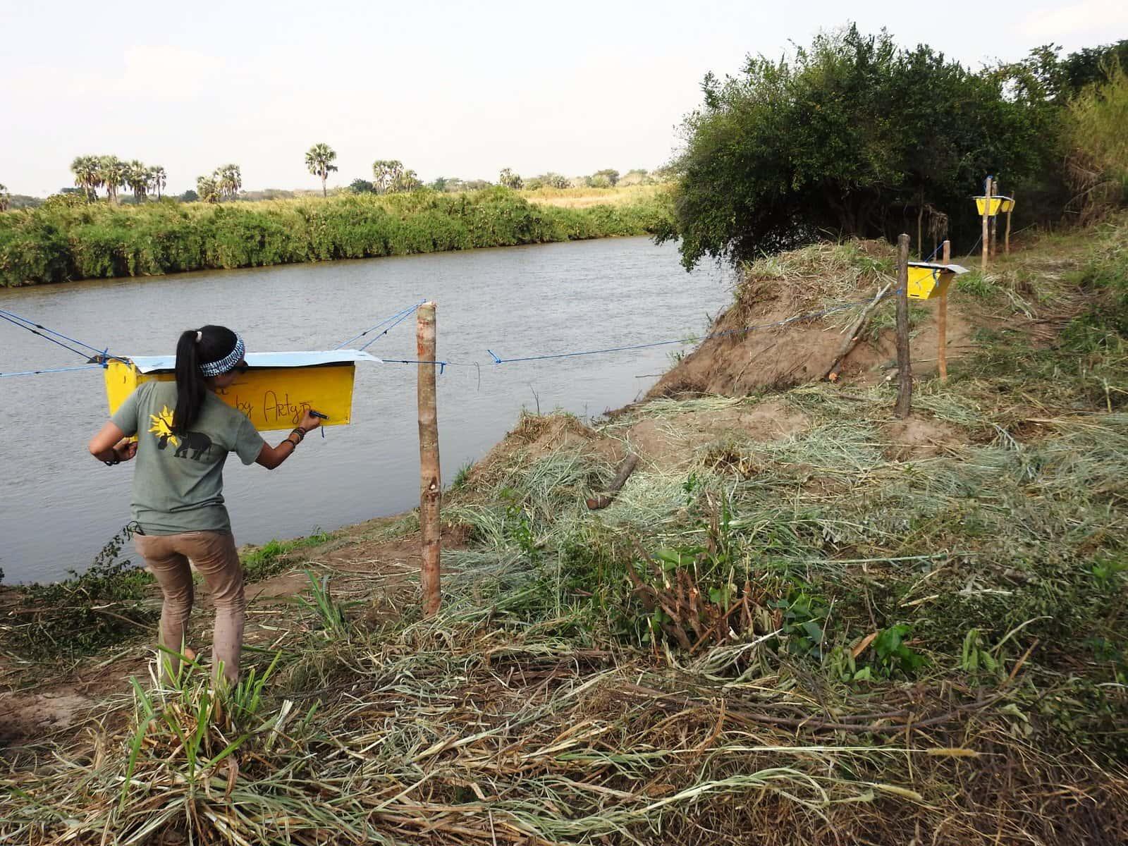 人象衝突怎麼解?印度農民架「蜂巢柵欄」請出蜜蜂來幫忙!
