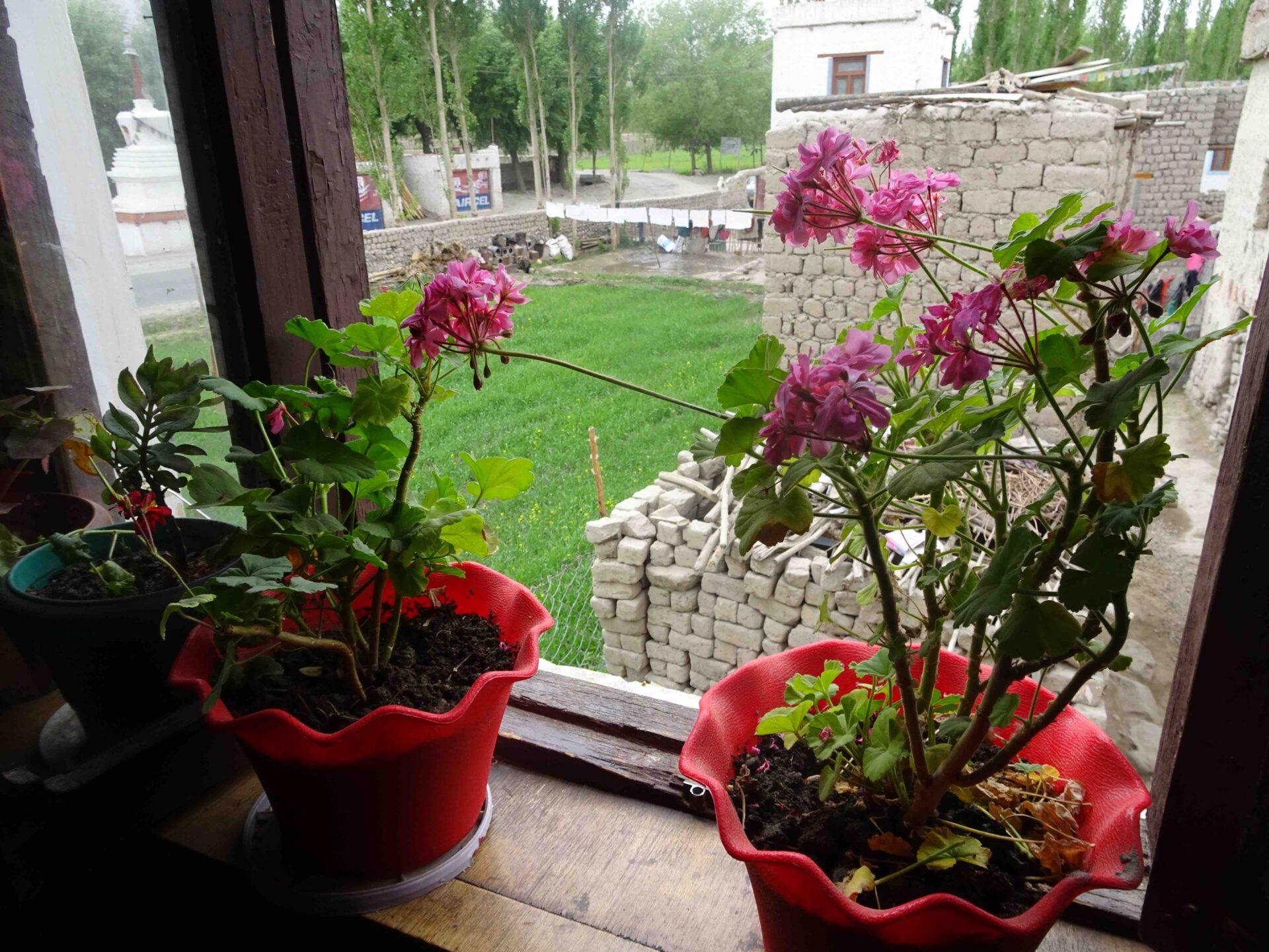 拉達克 Thiksey 村的家人,如同油菜花田一般美麗溫暖的緣分